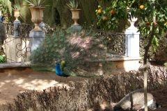 Park in Granada